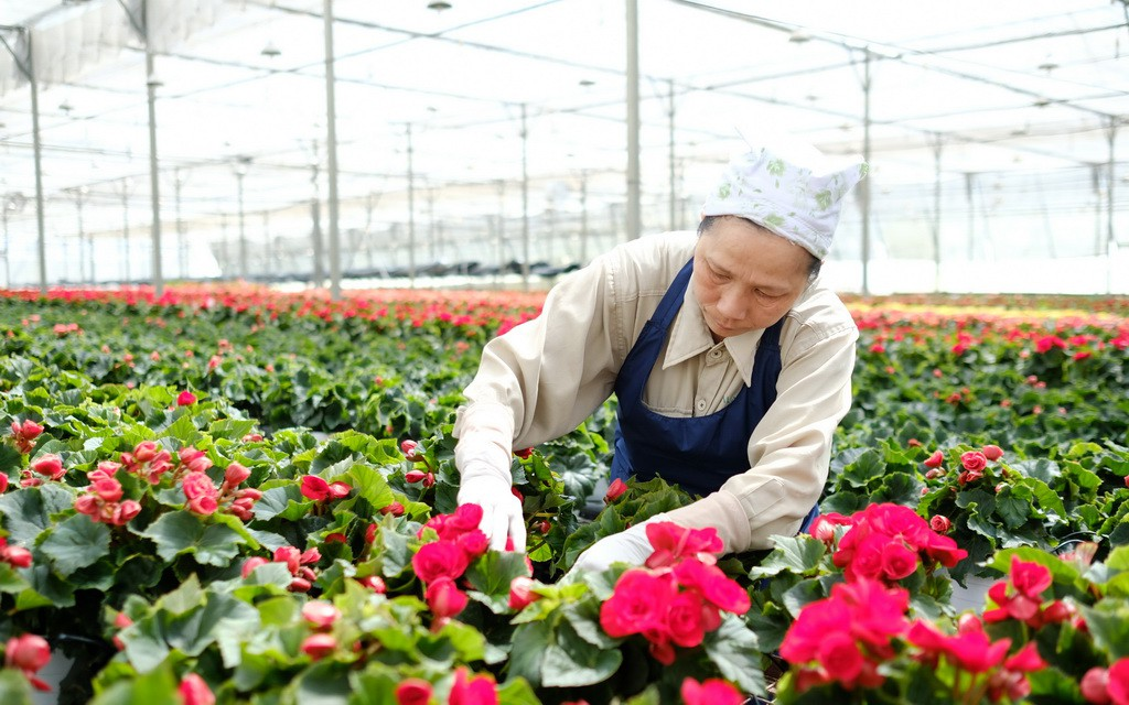 Vietnam sees opportunity in fruit, vegetable, flower exports