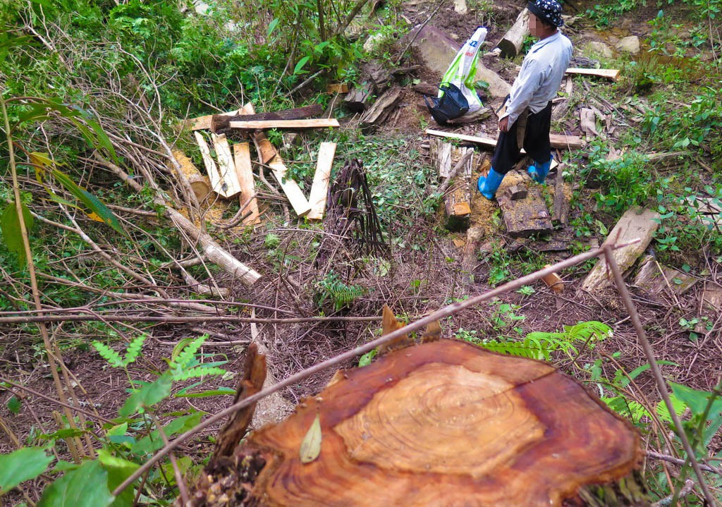 Wood from forests in northern Vietnam secretly sold to China