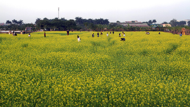 Many people visit the field.
