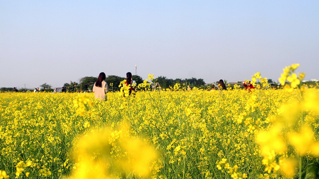 Hanoi youths pose with yellow canola flowers as winter approaches