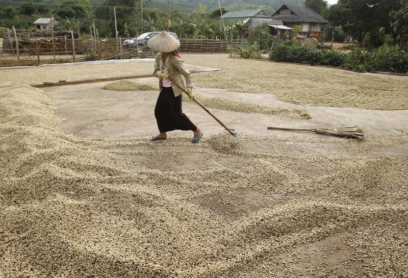 Vietnam coffee supply steady but trade thin; Indonesia subdued