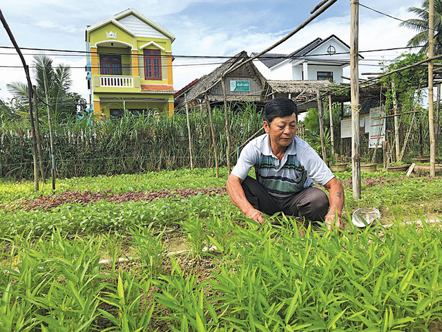 Vietnamese vegetable farmer turns over a new leaf by switching to organic model