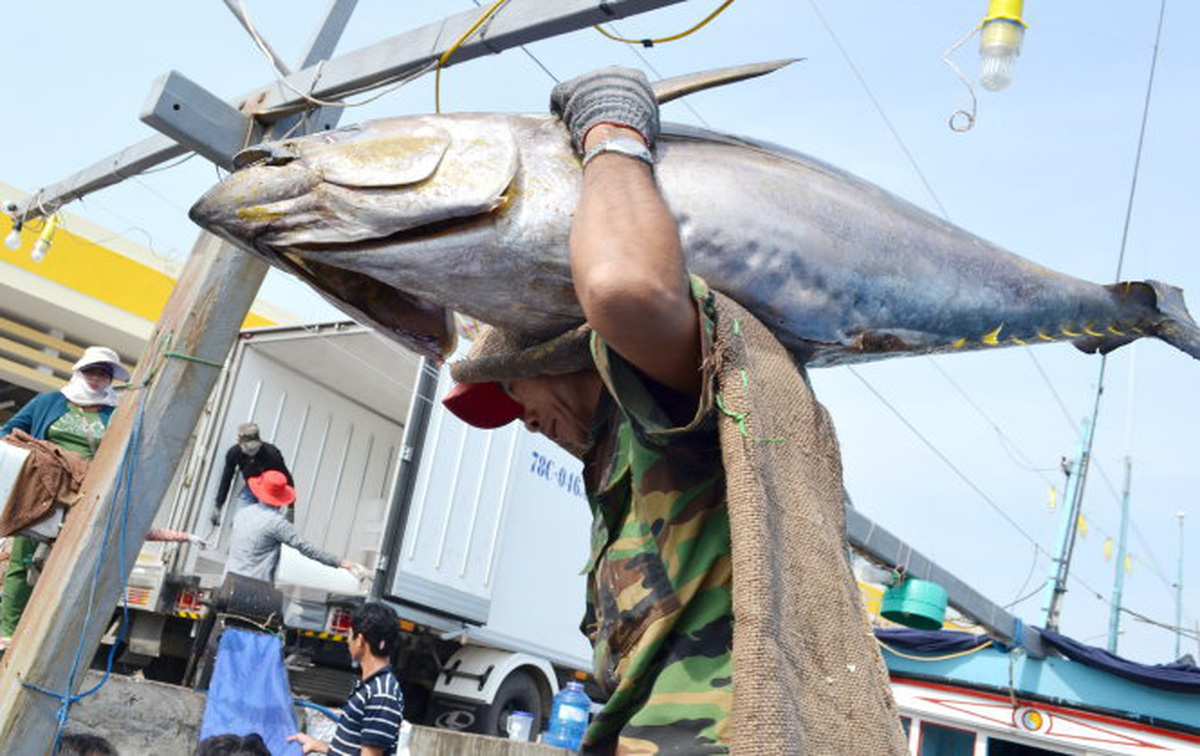 Vietnam's seafood industry reacts to 'yellow card' from EU