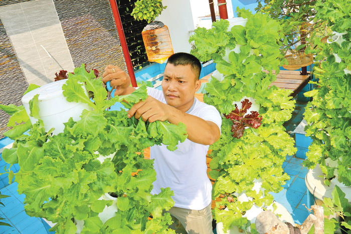 ​Saigonese turn to homegrown veggies for meals, Tet gifts