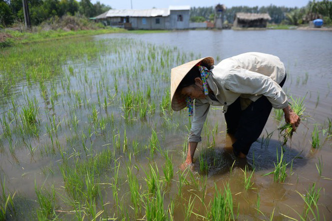 Vietnam's Mekong Delta residents internally migrate due to climate change: researches