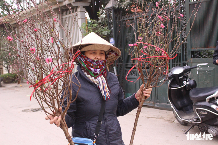 Florists from Nhat Tan Ward sell the cherry blossom branches for the last full moon of the lunar year. Photo: Tuoi Tre