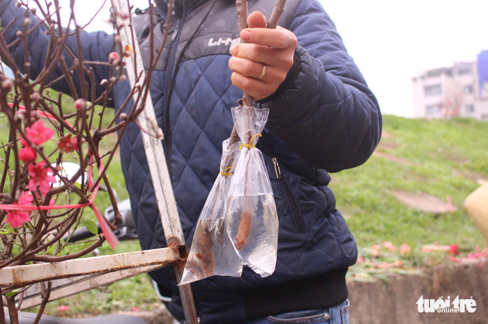 Bags of water are used to keep the branches hydrated and fresh. Photo: Tuoi Tre