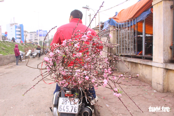 A buyer carries his branch of blossom home on a motorbike. Photo: Tuoi Tre