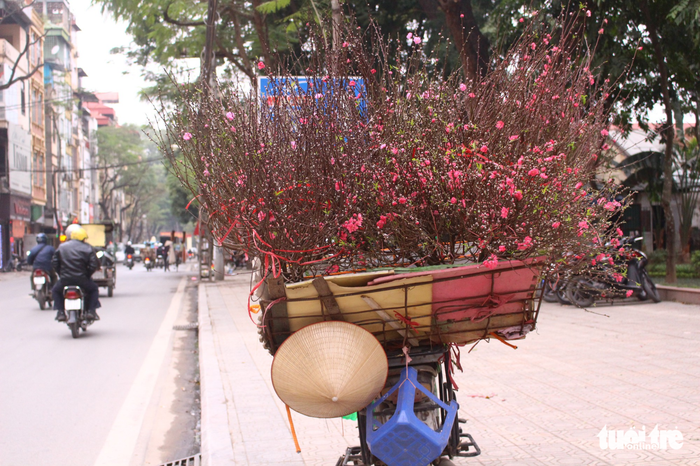A bicycle loaded with cherry blossoms parks on Thuy Khue Street. Photo: Tuoi Tre