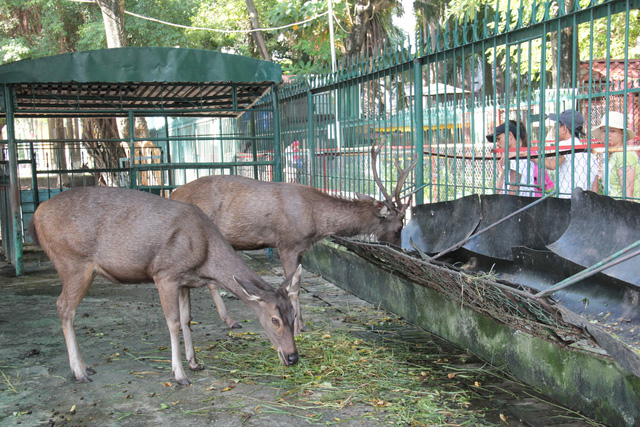 Vietnam establishes national association for animal protection