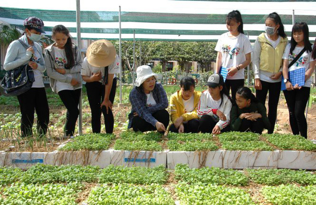 Vietnamese schools teach students to grow organic vegetables
