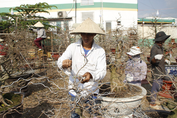 Workers take off aluminum wires used for shaping branches. Photo: Tuoi Tre