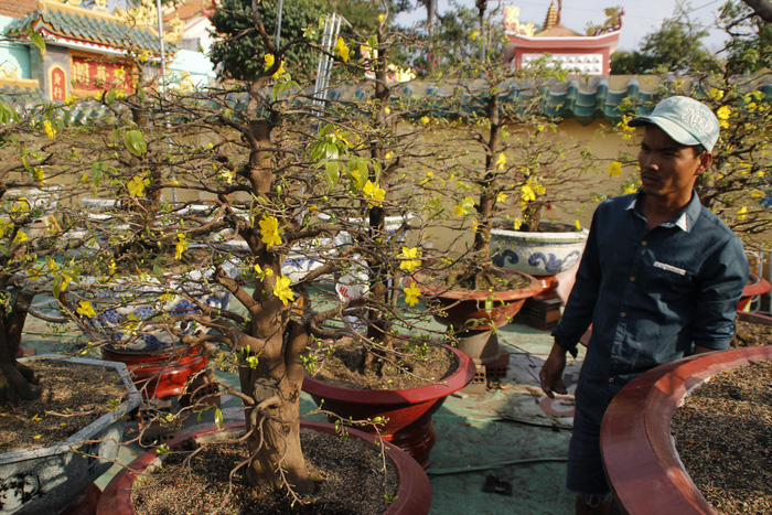 Apricot blossom market in Saigon thrives with Tet around corner