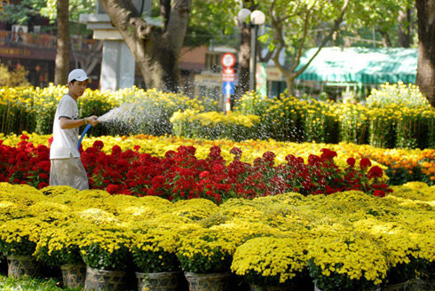 A man waters his flowers at a market in Ho Chi Minh City.  Photo: Tuoi Tre