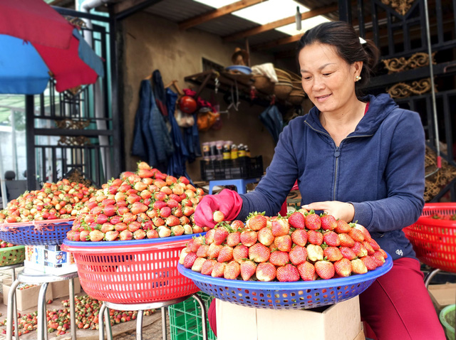 Expert highlights differences between Da Lat and Chinese strawberries
