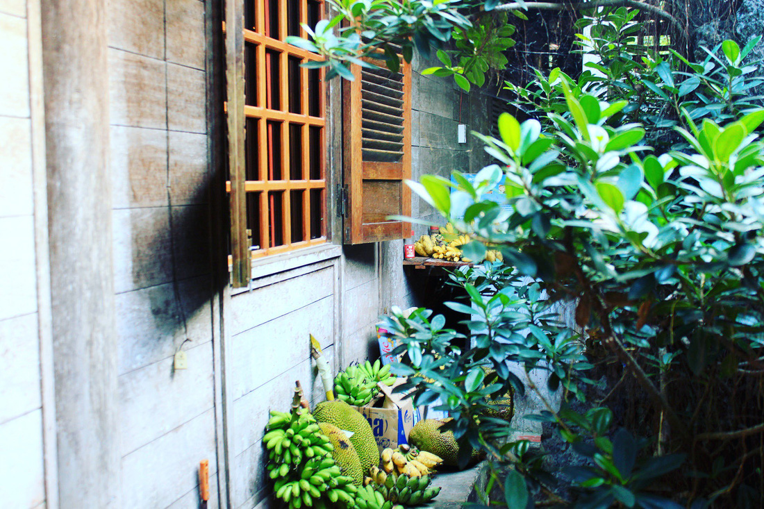 In Mr. Kiet's house, fruits are grown and collected, making the place livelier. Photo: Tuoi Tre
