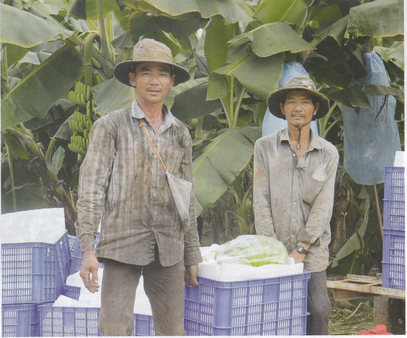 Returnees from Cambodia's Tonle Sap thrive in Vietnam