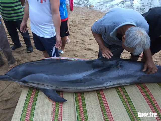 Dolphin washes ashore, saved in Vietnam