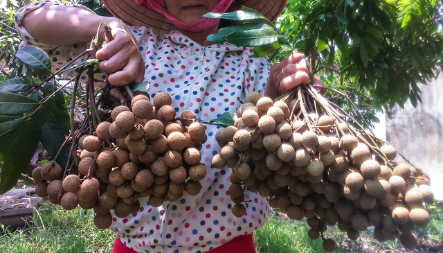 Australian officials optimistic about Vietnamese longan imports from 2019