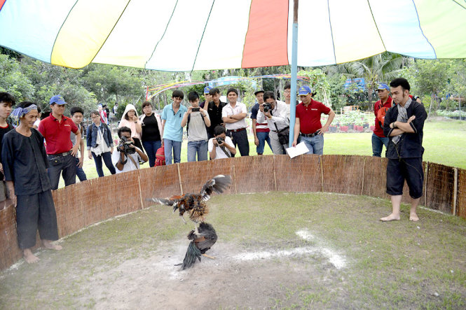 Hypocrisy at best: Is cockfighting a blood sport in Vietnam?