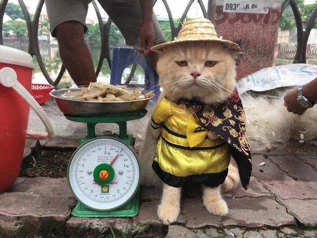Stylish feline fishmonger a Facebook sensation in Vietnam