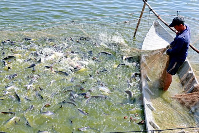 Vietnam's catfish on verge of losing US market over steep anti-dumping duties