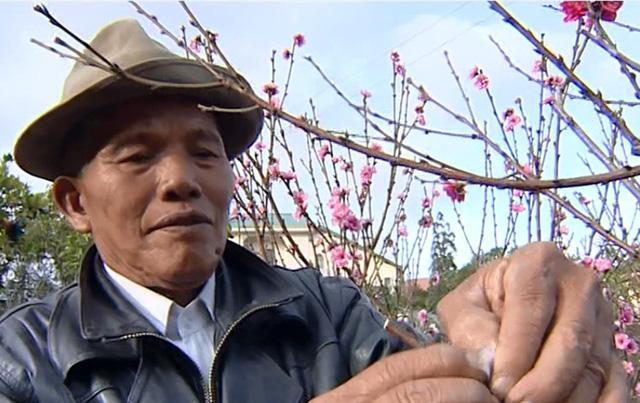 Untold stories of Da Lat – P6: Cherry blossom valley
