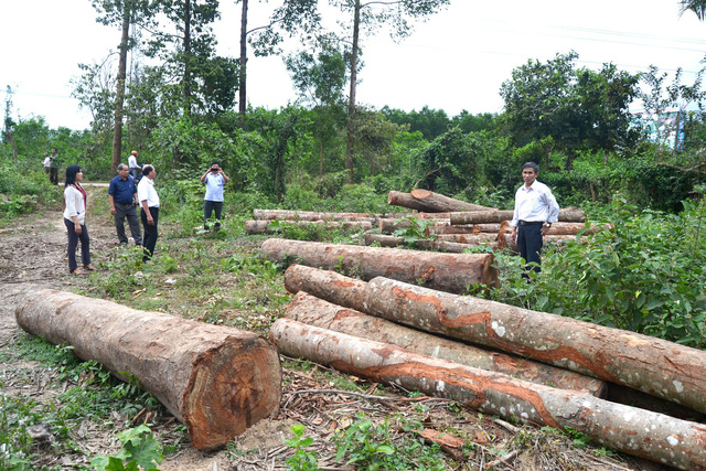 ​Investigation launched into suspicious logging in south-central Vietnam