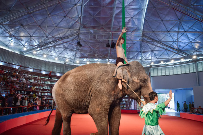 Asia for Animal Coalition calls on Vietnam to end circus animal cruelty
