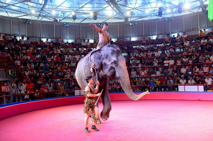 Vietnam park ceases animal circus shows following Asia for Animal Coalition request