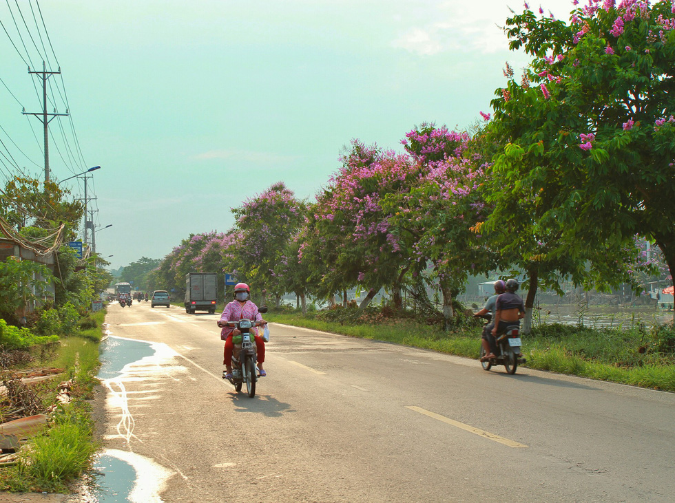 The normally vehicle-laden road seems less daunting with the cheerful blossoms hanging by the air.