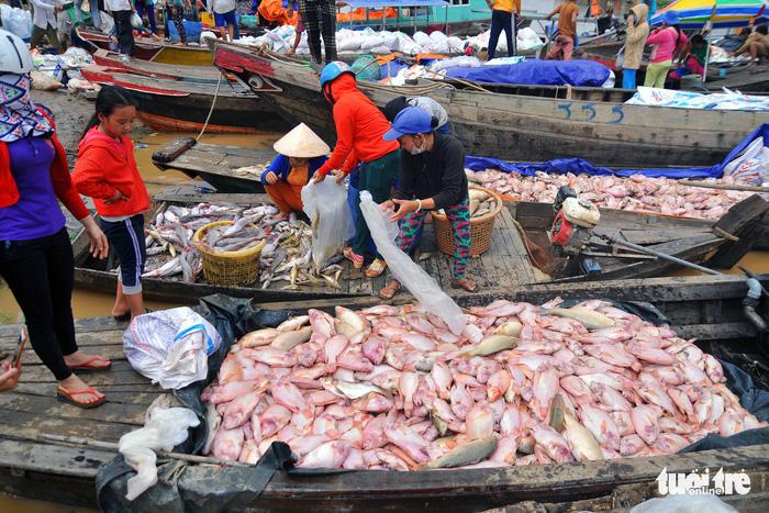 Massive fish deaths along southern Vietnamese river