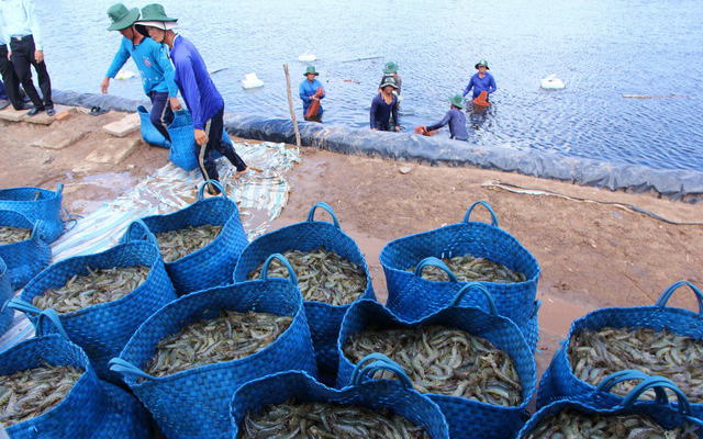 Vietnam's shrimp export likely to miss $10bn target due to price drop