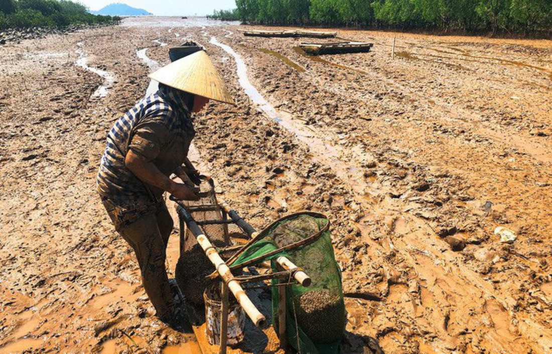 It is hard to believe clams can still live near such ravaged beaches. Photo: Tuoi Tre