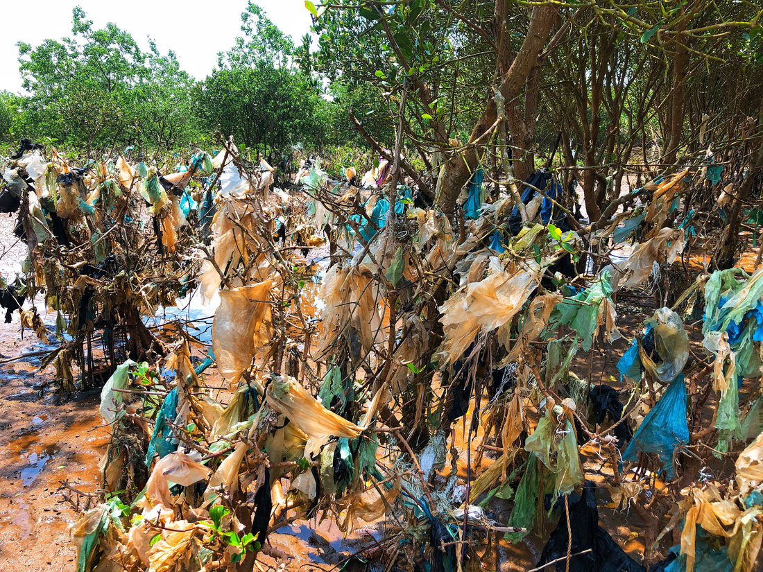 Trash envelopes a once green mangrove swamp. Photo: Tuoi Tre