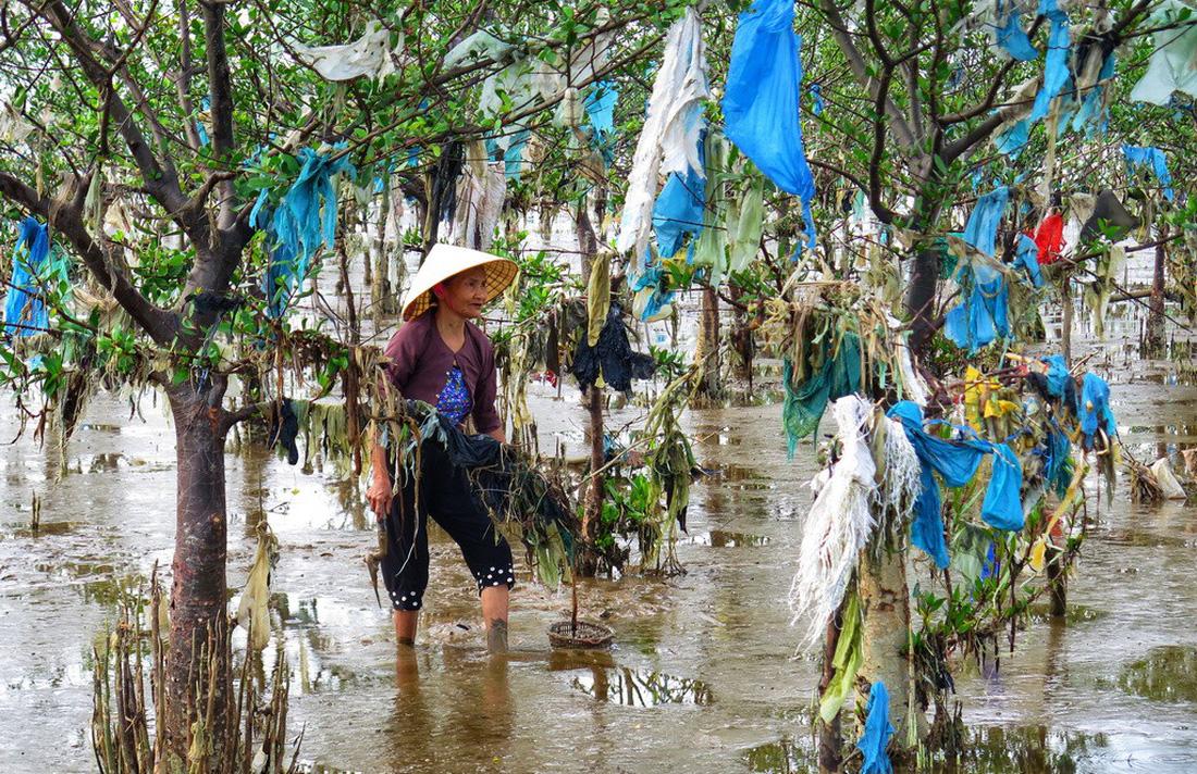 A woman sifts through the junk-ridden mangrove swamp. Photo: Tuoi Tre