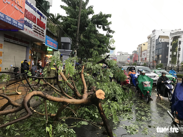 A tree breaks due to strong wind on Cong Hoa Street.