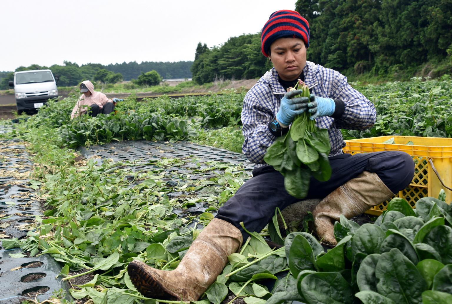 Demand for foreign workers may soften Japan's immigration rules