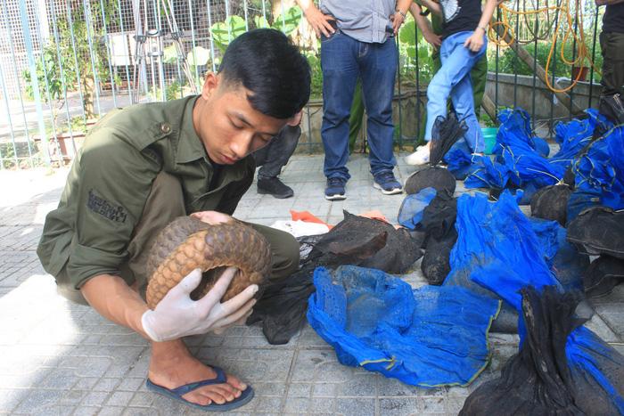 Dozens of endangered pangolins seized in Vietnam