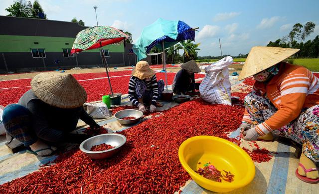 High levels of carcinogen found in chili powder in Vietnam