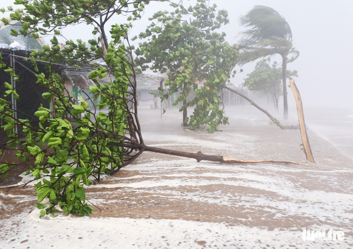 ​Up to 13 typhoons to hit East Vietnam Sea this year