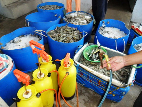 Scores of gel-injected shrimp found in north-central Vietnamese tourist magnet