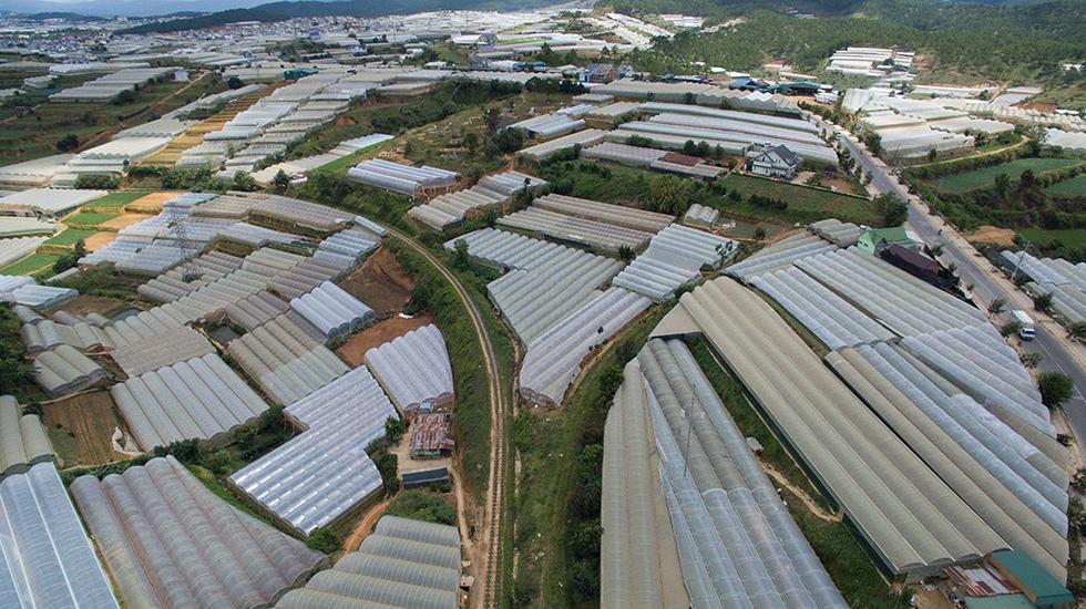 Greenhouse cultivation warms Vietnam's Da Lat