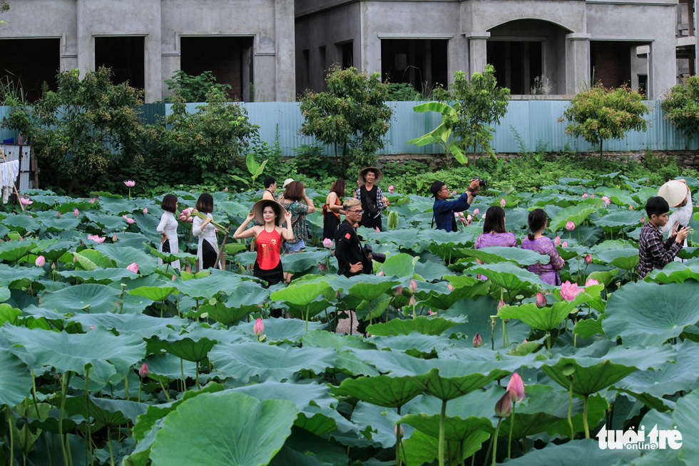 Numerous visitors are seen at lotus ponds along the West Lake in Hanoi. Photo: Tuoi Tre