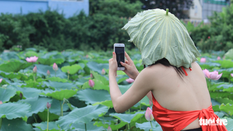 A girl in ao yem, a traditional Vietnamese bodice, takes photo for her friends at the lotus ponds in Hanoi. Photo: Tuoi Tre