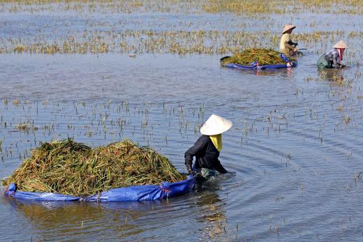 Vietnam H1 coffee exports seen up 9.6 pct y/y, rice to rise 26.2 pct y/y