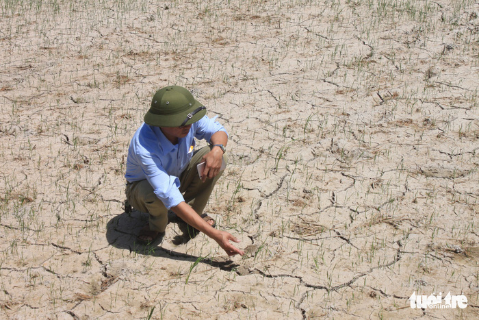 Drought takes toll on 1,000 hectares of paddy field in central Vietnam