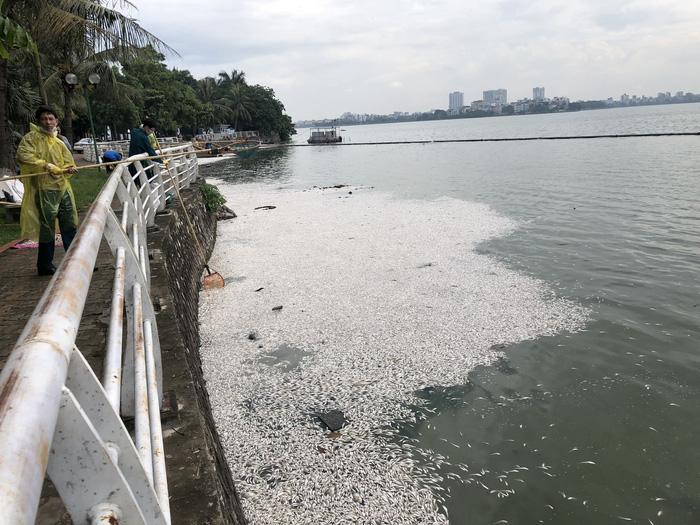 Numerous dead fish float in Hanoi's largest lake