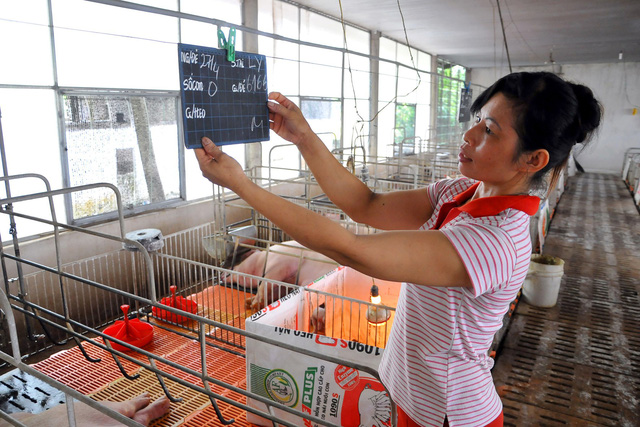 American pork may flood Vietnamese market in wake of US-China trade war