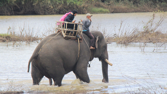 Vietnam national park given $65,000 grant to cease elephant riding